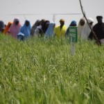 Upcoming Research Seminar on Rice Seed Policy – Tuesday, August 24th in Abuja