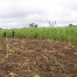 Upcoming Research Seminar on the Preliminary Results of the  Land Tenure Pilot Evaluation – November 5th in Abuja