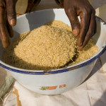Policy options for accelerated growth and competitiveness of the domestic rice economy in Nigeria